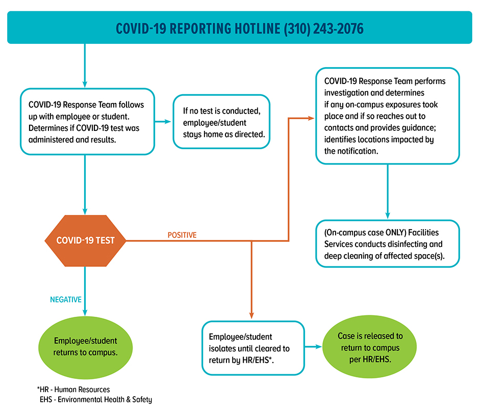 Image of flowchart of COVID-reporting protocol. Read FAQ on page for details