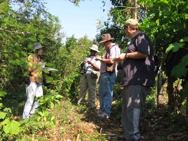Chiapas Cornfield