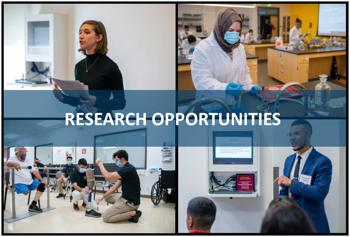 Research Opportunities- Students engaged in class, lab and presenting research